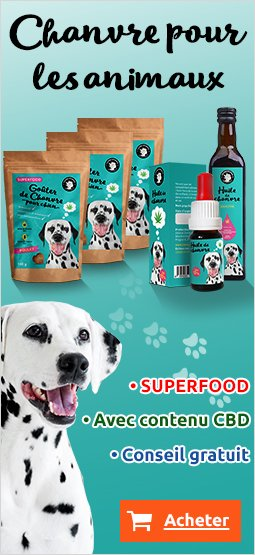 Right Banner Dog 249x395 FR